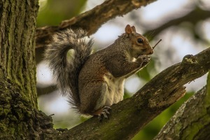 squirrel-952664_1920